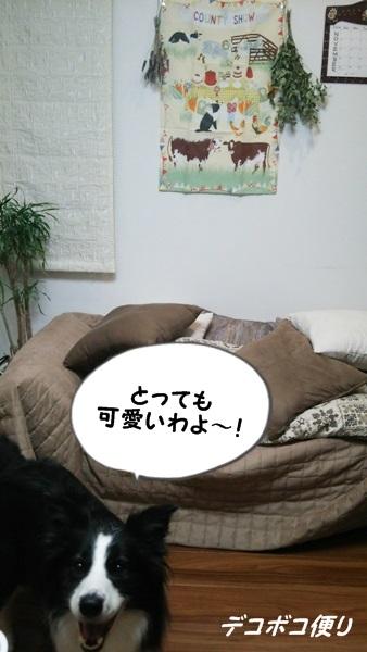 20141111 ぽちっとしちゃった!5