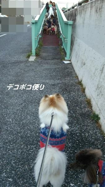20141119 わらわら散歩1