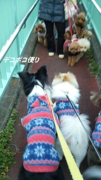 20141119 わらわら散歩2