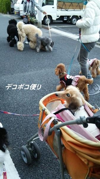 20141119 わらわら散歩4
