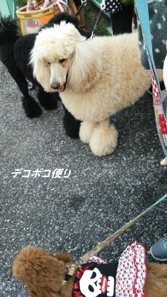20141119 わらわら散歩3