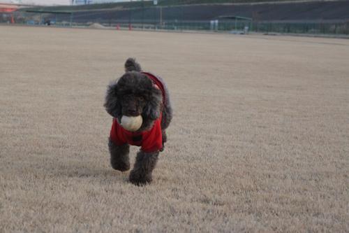 ボール好き
