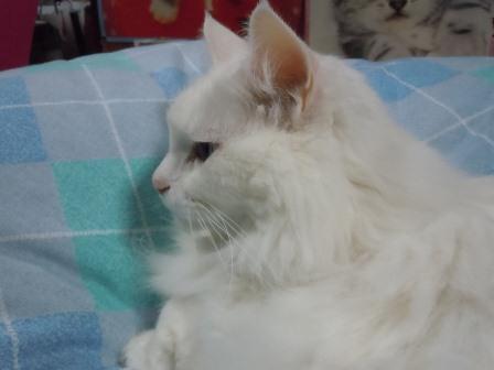 みーたん2012-1