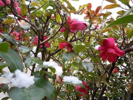 2012-01-24の雪1