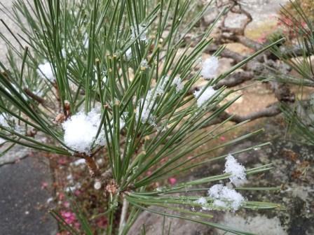 2012-01-24の雪2