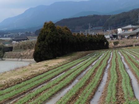 有田川の畔②(2012‐02‐23)