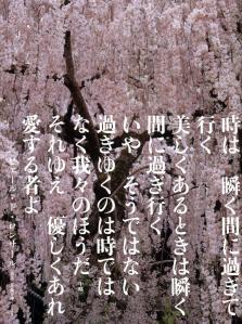 『ミセス』(2012.4月号)①