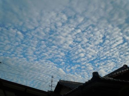 出水市の早朝1(2012-08-15)