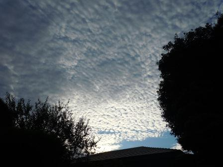 出水市の早朝2(2012-08-15)