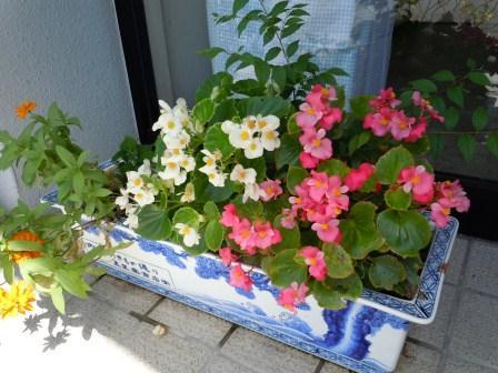 花壇1(2012-08-25)