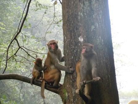 森林公園の猿