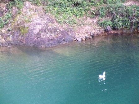 有田ダム「秘色の湖」3(2012-10-04)