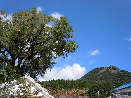大公孫樹と英山(2012-10-04)