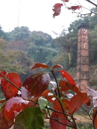 雨の日曜日2(2012-11-04)