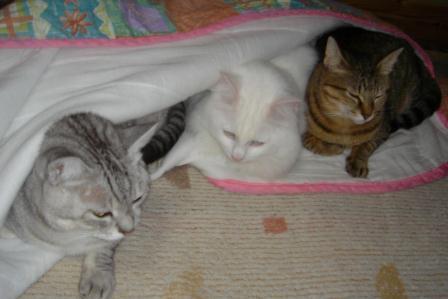 愛猫さんたち1