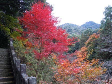 陶山神社の紅葉1