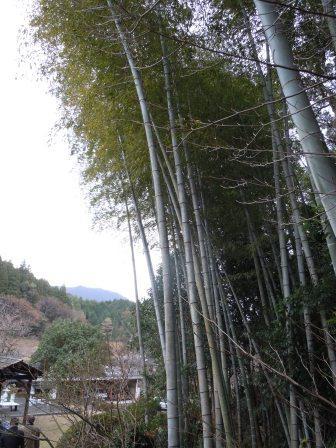 しん窯の竹林(2012-12-18)