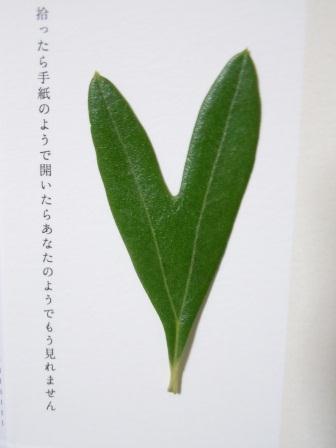 ハート型のオリーブの葉3