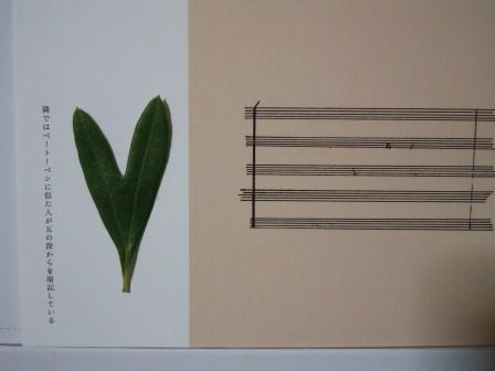 ハート型のオリーブの葉4