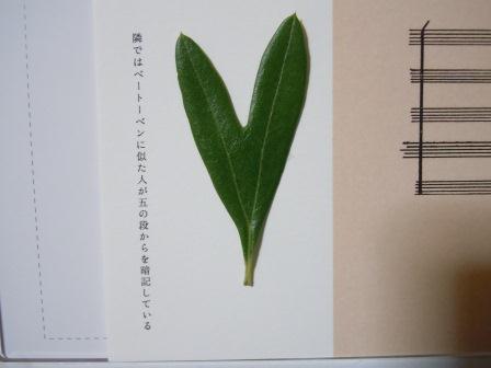 ハート型のオリーブの葉