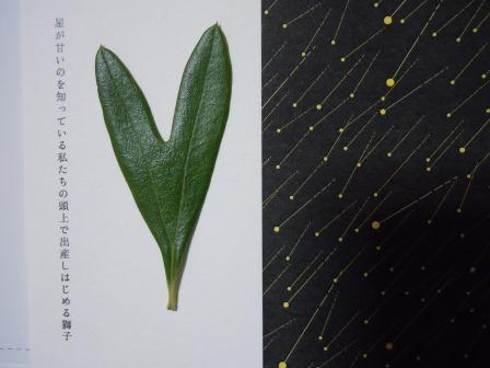 ハート型のオリーブの葉6-2