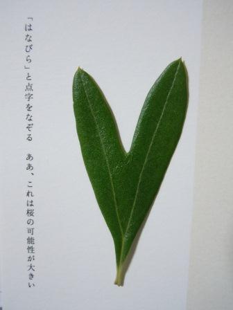 ハート型のオリーブの葉8
