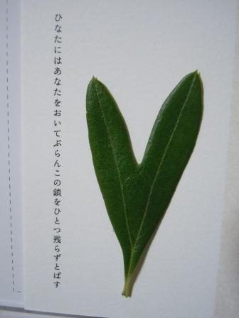 ハート型のオリーブの葉10