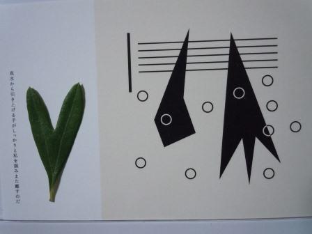 ハート型のオリーブの葉11