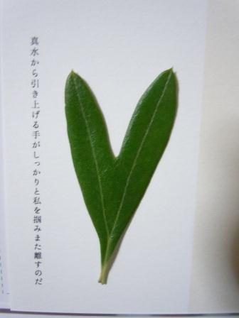 ハート型のオリーブの葉12