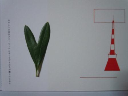 ハート型のオリーブの葉13