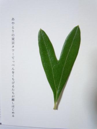 ハート型のオリーブの葉14