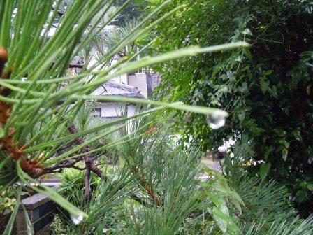 雨の日曜日5(2011-09-04)