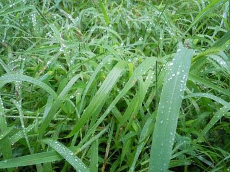 雨の日曜日7(2011-09-04)