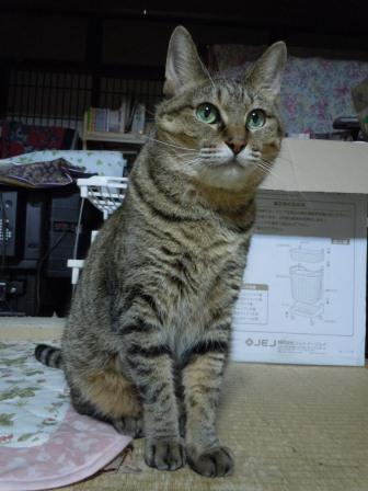 のんちゃん(2011-09-06)