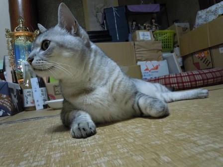 ごんちゃん3(2011-09-06)