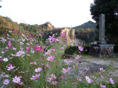 泉山磁石場コスモス1(2011-10-17)
