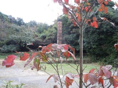紅葉のハナミズキ(2011-10-23)