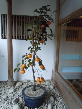 柿右衛門窯 柿の鉢植え(2011-11-02)