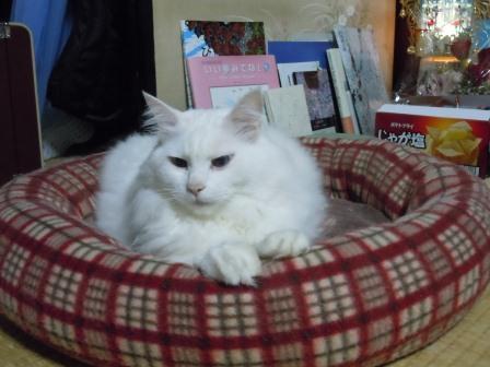 みーたん3(2011-11-06)