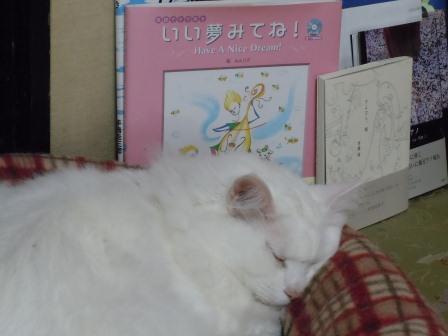 みーたん1(2011-11-06)