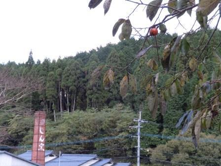 しん窯(2011-11-07)