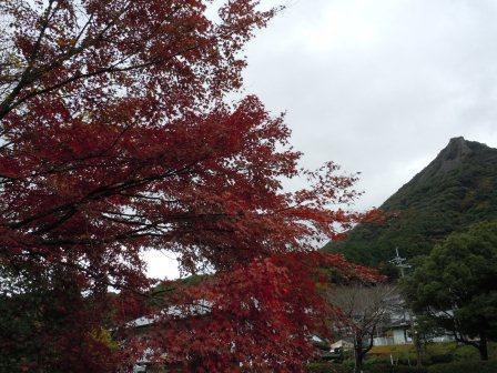 紅葉と英山(2011-12-03)