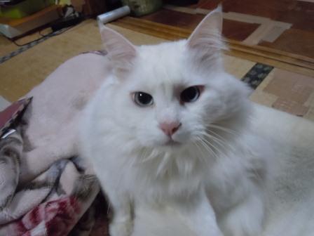 みーたん3(2011-12-17)