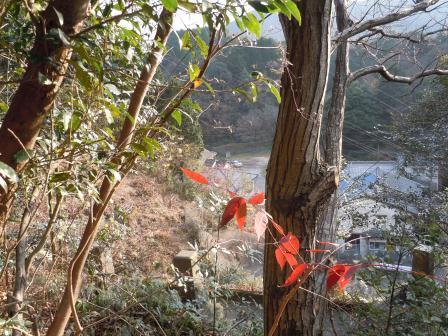 墓参り2(2011-12-29)