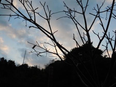 ハナミズキと煙突2(2011-12-29)