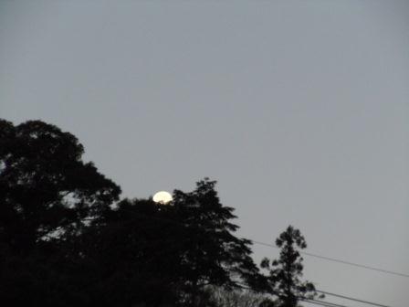 有明の月(2012-01-12)