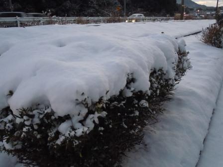 2月2日の雪1