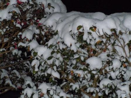 深夜の雪華1(2012-02-03)