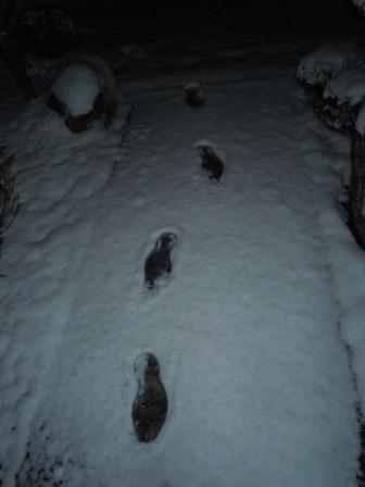 深夜の雪華4(2012-02-03)