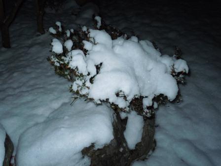 深夜の雪華2(2012-02-03)